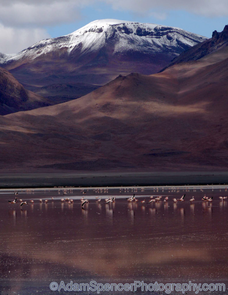Flamingoes of the Red Lagoon, Bolivia